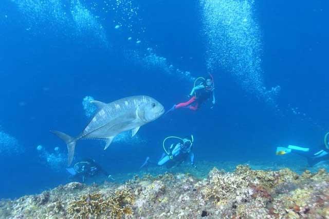 ishigaki_diving5
