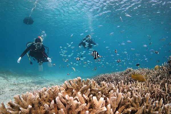 coral_okinawa